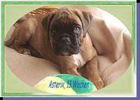 Asterix von der Siegperle Wurftag: 22.02.2002 Zuchtbuchnummer: 220275